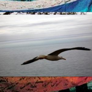 Mi offristi la tua ala di riserva perché riprendessi il volo - Edvige Di Venezia ricorda don Tonino Bello